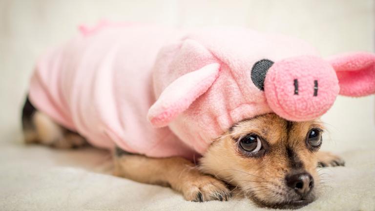Schweinehund – wie Du ihn bändigst und trainierst
