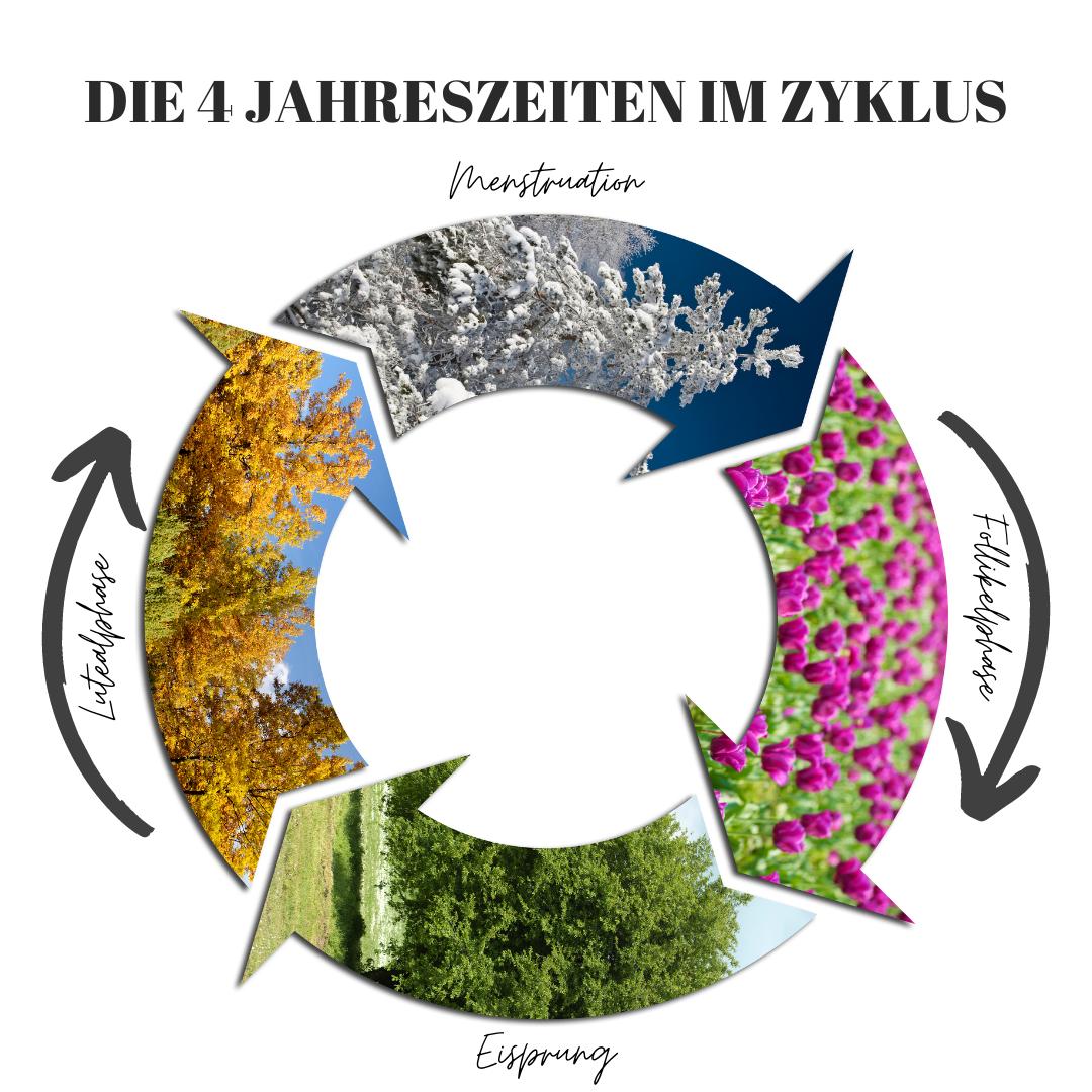 Weiblicher Menstruationszyklus als Diagramm mit den vier Jahreszeiten